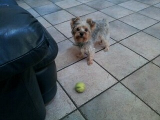 Dog and Pingpong ball