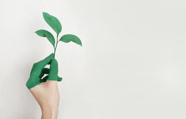 Beauty Brands Embrace Sustainability